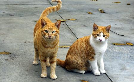 عکس دو گربه شهری two cats wallpaper