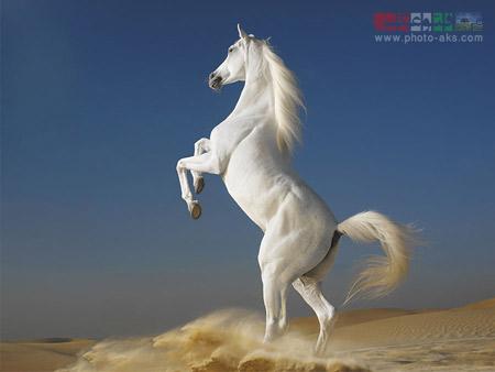 اسب horse