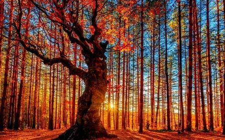 نقاشی جنگل پاییزی بسیار زیبا autumn forest painting