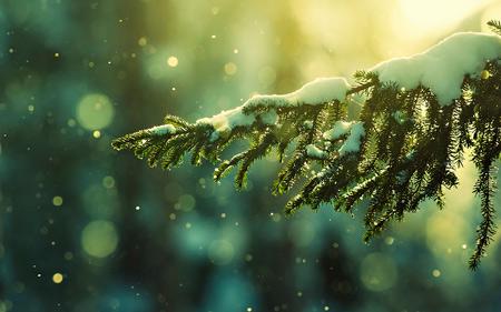 برف روی شاخه درخت کاج barf roye barg kaj