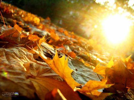 برگ خزان آفتاب sun on autumn leaves