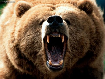 نعره خرس گریزلی bear yell danger