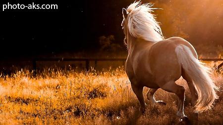 زیباترین تصاویر اسب ها horse hd wallpaper