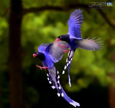 عکس های دیدنی پرندگان بهشتی beautiful birds fly