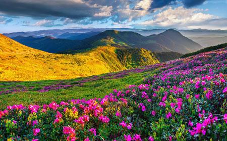 منظره بهاری دشت گل زیبا beautiful landscape 2016