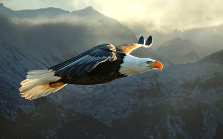 پرواز بسیار زیبای پرنده عقاب big eagle flying