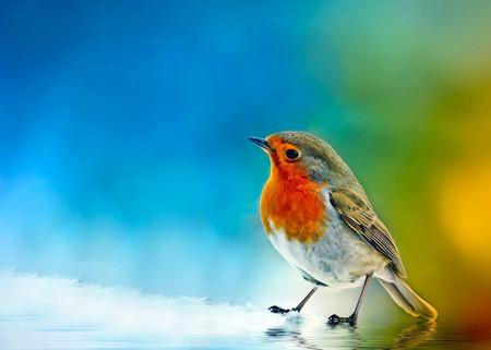 والپیپر زیبا از پرنده ها birds wallpaper full hd
