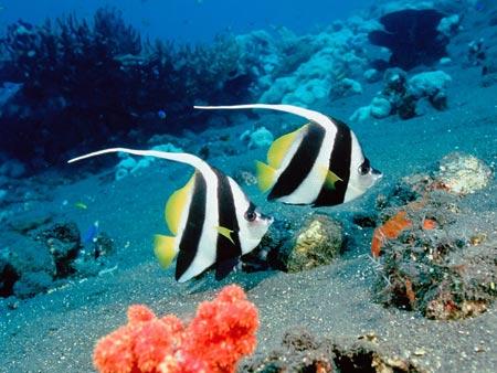 عکس عاشقانه ماهی های زینتی black white fishes
