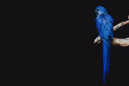 عکس طوطی آبی زیبا blue parrot bird