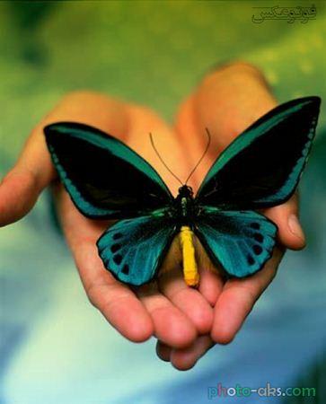 عکس زیبای پروانه روی دست butterfly on hands