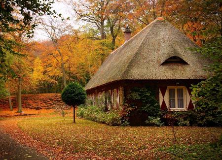 خانه زیبا در منظره پاییزی جنگل forest autumn house