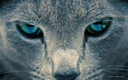 چشم گربه خاکستری cat eyes wallpaper
