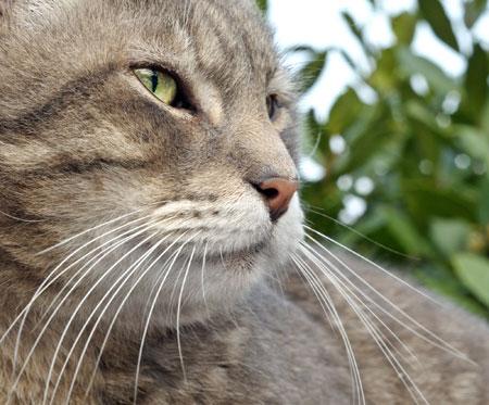 عکس پوزه و سبیل گربه cat muzzle nose