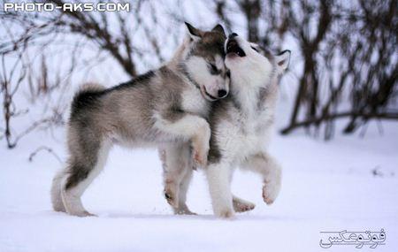 توله سگ های بامزه  cute puppies