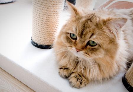 عکس گربه پشمالو مظلوم و بامزه cute cat pictures
