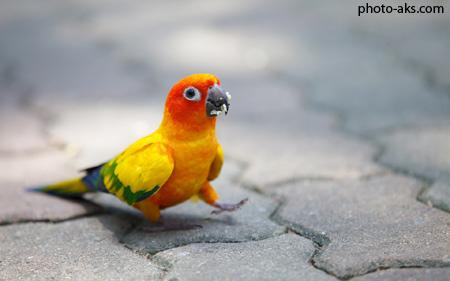 سایت عکس طوطی ها cute colorful parrot