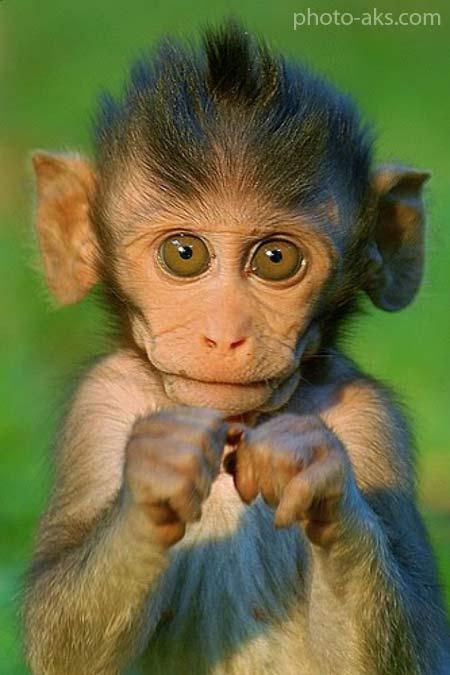 جالب ترین عکس از حیوانات cute animal photo gallery