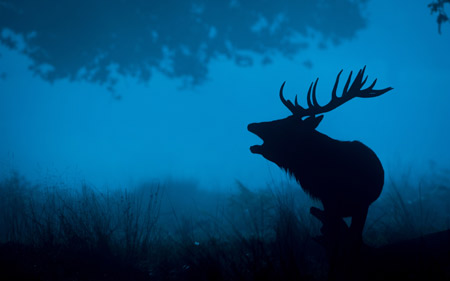 تصویر زمینه گوزن در تاریکی شب deer silhouette 4k wallpaper