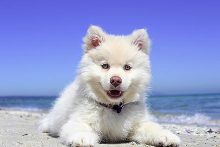 سگ سفید پشمالو white dog beach