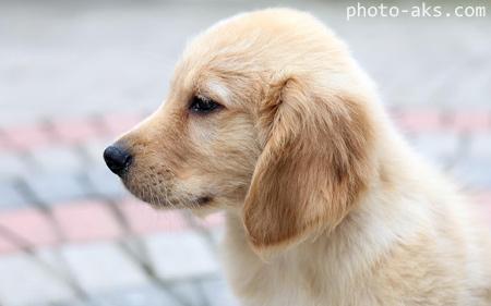 عکس زیبای سگ غمگین dog puppy beautiful