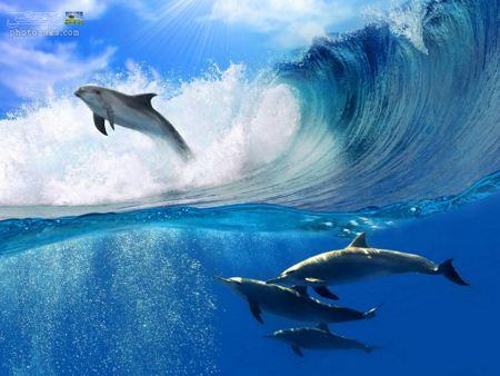 بازی و پرش دلفین ها روی امواج dolphins on waves
