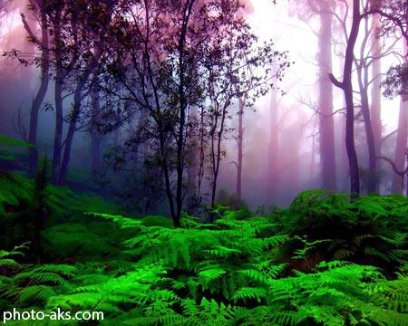 منظره رویایی و زیبای جنگل dream forest nature