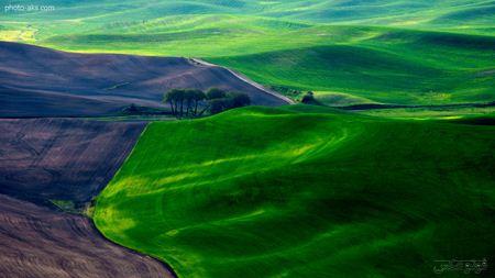 منظره دشت سرسبز  green nature field