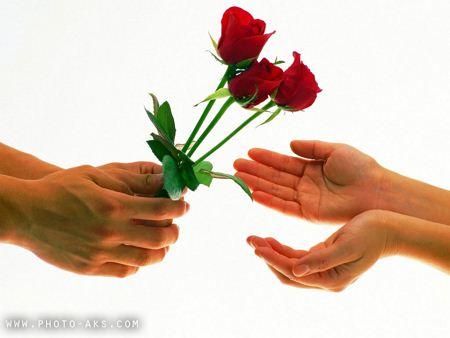 عکس تقدیم گل قرمز tagdim shakhe gol roz