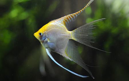 پوستر ماهی آکواریومی زیبا fish swim underwater