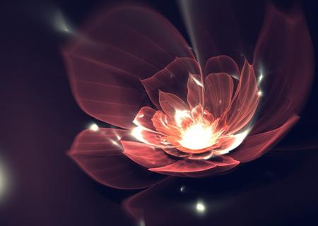 عکس انتزاعی گل درخشان flower dark shine