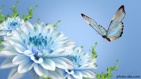 پوستر پروانه و گلهای آبی  blue flowers and butterflies