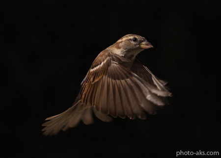 پرواز پرنده fly birds