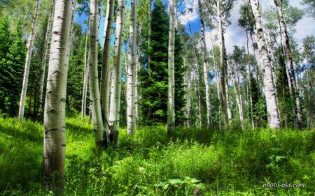 جنگل کوهستانی forest nature