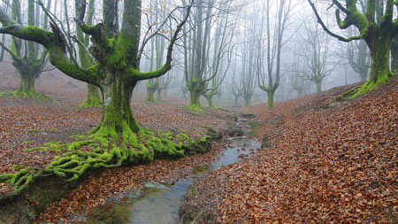 منظره جنگل مه آلود پاییزی forest trees river fog