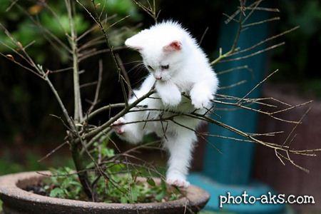 بچه گربه سفید با مزه white funy kitty