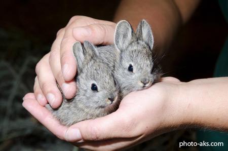 خرگوش های خاکستری کوچولو funny rabbits gray