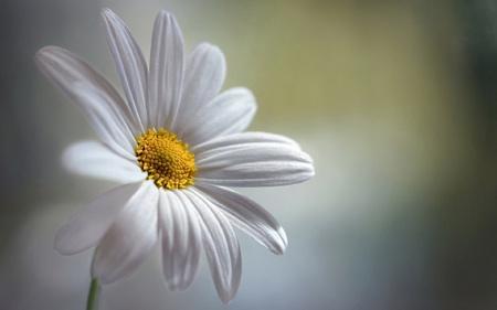 عکس پس زمینه گل مینا aks gole mina