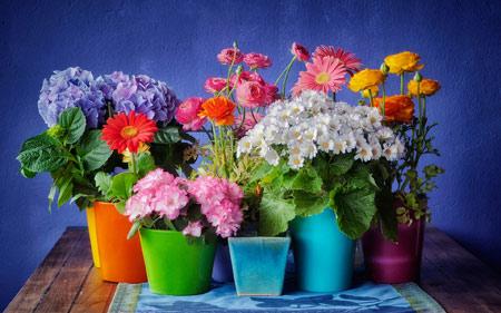 عکس گلدان گلهای بهاری goldan golha bahari