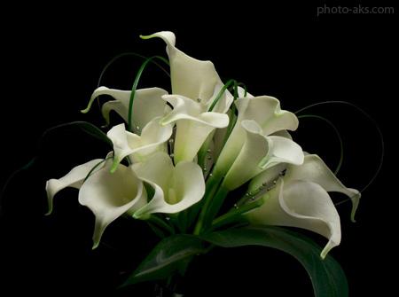 دسته گل شیپوری سفید زیبا gole sheipori sefid