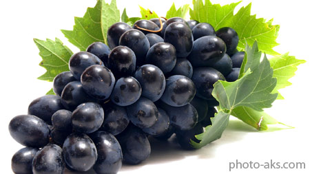خوشه انگور سیاه black grapes