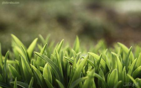 والپیپر چمن سبز و تازه green grass