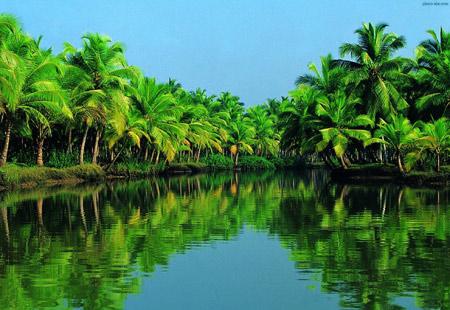 منظره سبز رودخانه و جنگل استوایی green jungle river