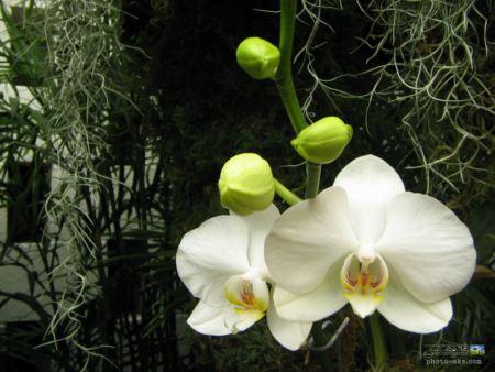 عکس گل ارکیده با کیفیت بالا  hd wallpaper orchid flower