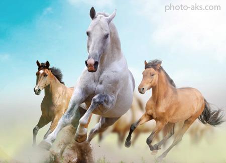 پوستر اسب های زیبا در حال دویدن beautiful horse wallpaper