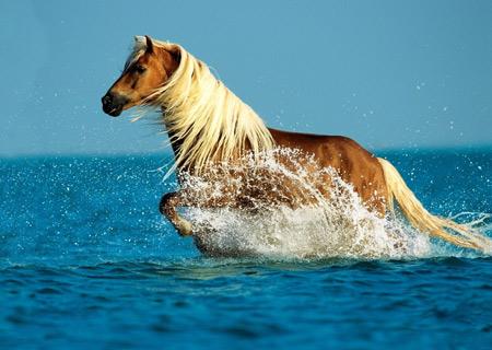 عکس اسب در حال دویدن در دریا horse water walk sea