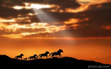 والپیپر اسب های وحشی horses wallpaper