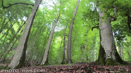 جنگل های شمال ایران iran forest nature