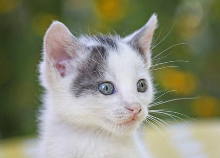 عکس صورت گربه خال خالی kitten face spotted