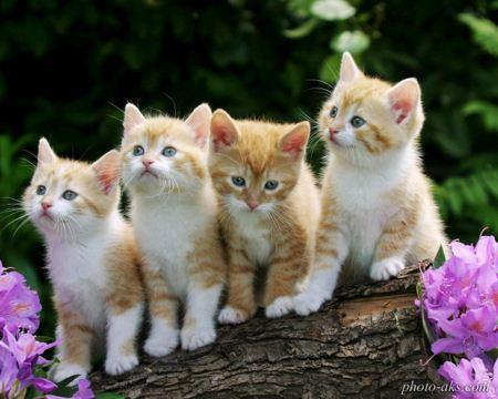 عکس نازترین بچه گربه ها kittens wallpapers