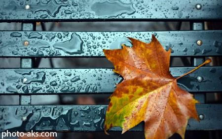 برگ پاییزی روی نیمکت بارانی leaf fall bench rain